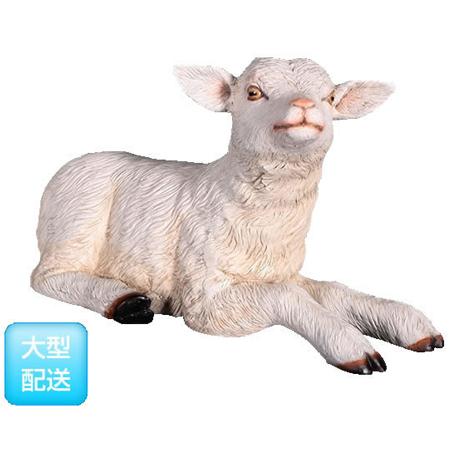 寝そべるヤギの赤ん坊【CARUNA】