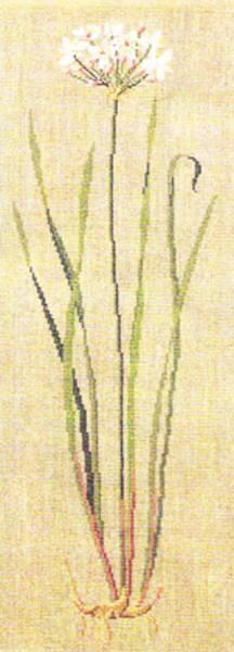 フレメ クロスステッチ刺繍キット 【ハナイの花】 デンマーク 北欧 上級者 輸入 30-4596