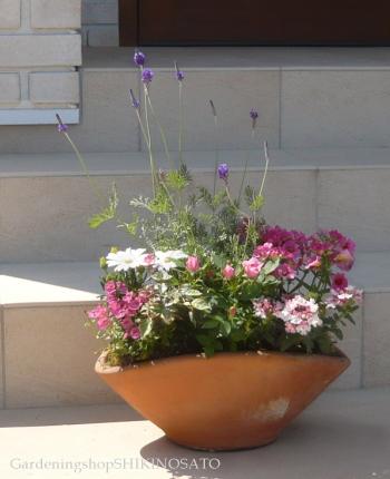 ラベンダーとピンクのお花の可愛らしいお花畑の寄せ植え(舟形Lサイズ)