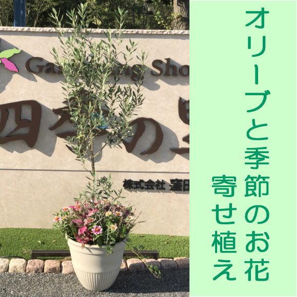 【贈り物・ご自宅に】フラワーギフトオリーブと季節のお花たっぷりの寄せ植え高さ1.5m大きいサイズ