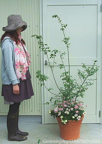 【実のなる木の寄せ植え】ブルーベリーと季節のお花たっぷりの寄せ植え