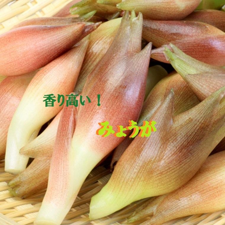 高知県産みょうがたっぷり!約1kg入り今なら甘酢1袋も付いています!