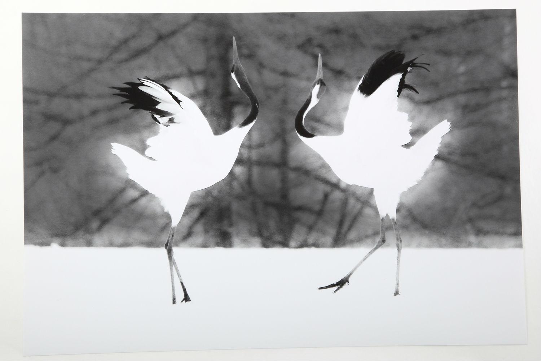 【超安い】 of丹頂鶴「きゅうあいだんす(Dance of Love)」インクジェット用紙, REDPEPPER OFFICIAL STORE:24e636e3 --- breathoflove.se