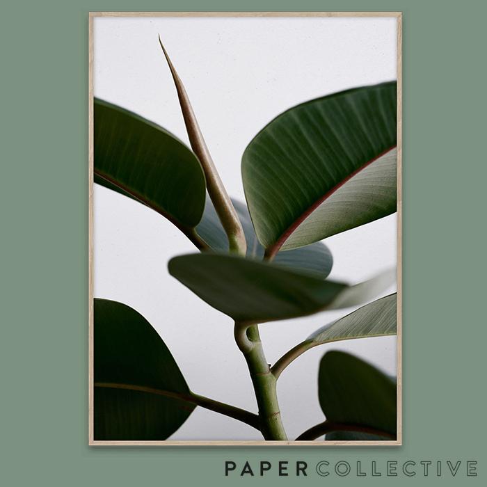 入手困難 シンプルながら印象深いデザインが見る人の心を楽しませてくれます PAPER COLLECTIVE GREEN HOME 超激安 02 08108グリーンホーム02 50x70cmペーパーコレクティブ 葉 観葉植物 Kantinkoski ポスター Riikka インテリア 北欧