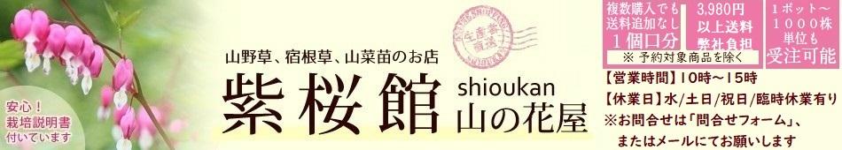 紫桜館 山の花屋 楽天市場店:平成元年創業の山野草・山菜苗販売業者です。1ポットからご注文承ります。