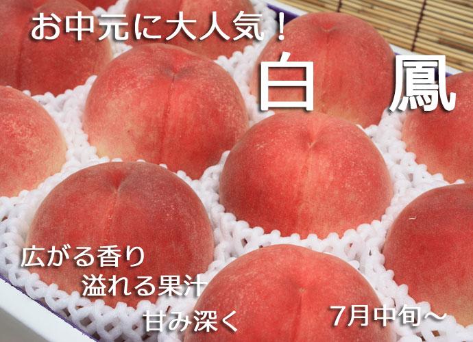もも 減農薬 和歌山県 産地直送 あら川の桃 白鳳(最高級)4Lサイズ 約4kg(約13玉)【発送 7月中旬 ~ 7月下旬】