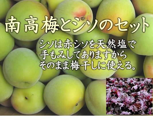 奈良県 西吉野の減農薬栽培  南高梅 と 塩もみ赤紫蘇セット (南高梅 約5kg+赤シソ 500g) 【発送:6月中旬頃~7月上旬頃】 ※塩もみ赤紫蘇は無農薬です