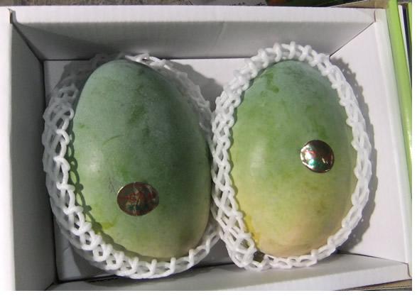 アップルマンゴーより甘く濃厚です! 送料無料 産地直送 希少!わけあり沖縄産キーツマンゴー約1kg(1~2個)【発送期間 8月上中旬頃~9月中旬頃】