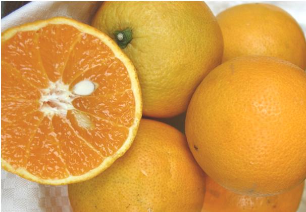 【産地直送】和歌山 有田・山下さんのバレンシアオレンジ 約10kg(50~70個前後入り)【発送時期:6月下旬頃~7月末頃】※なくなり次第終了