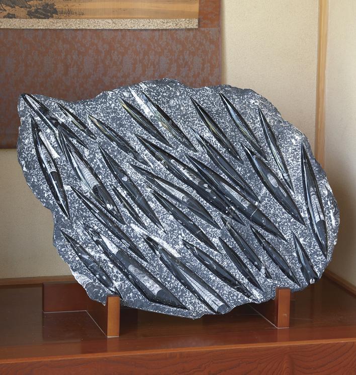 『巨大化石オルソセラス』 プレート型(小)【鉱物】【通販・販売】