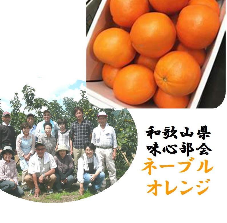 「産地直送!!」和歌山県紀の川市味心部会 ノーワックス ネーブルオレンジ 1箱3kg