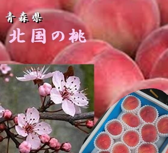 桃は山梨や岡山だけではございません 北国の桃は昼夜の温度差で甘みが凝縮 再入荷 希少 予約販売 しかもやわらかい日差しで上品さときめ細かな肉質を生み出しております 青森県産 1箱2.5kg 北国の桃 昼夜の温度差が生んだ味わい 6~10玉