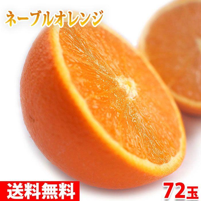 【送料無料】ピュアスペクト ネーブルオレンジ 「BLACK」 72玉入り