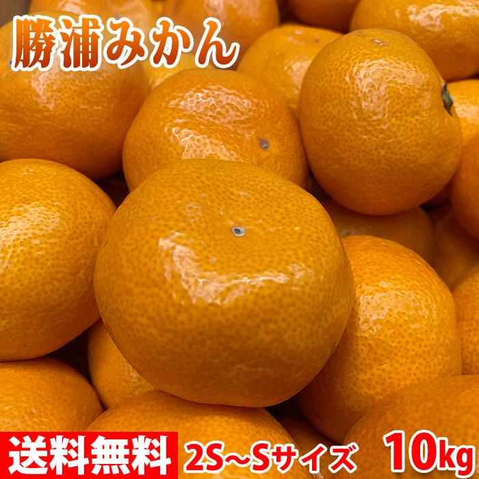 【送料無料】徳島県産 勝浦みかん(晩生みかん・十万) Sサイズ 10kg