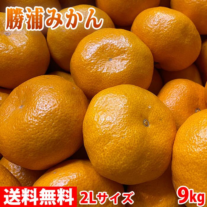 【送料無料】徳島県産 勝浦みかん(晩生みかん・十万) 2Lサイズ 10kg