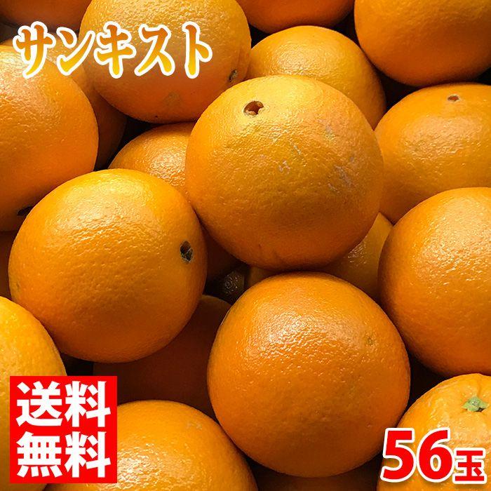 【送料無料】サンキスト・オレンジ(GOLDEN JOY) 56玉入り