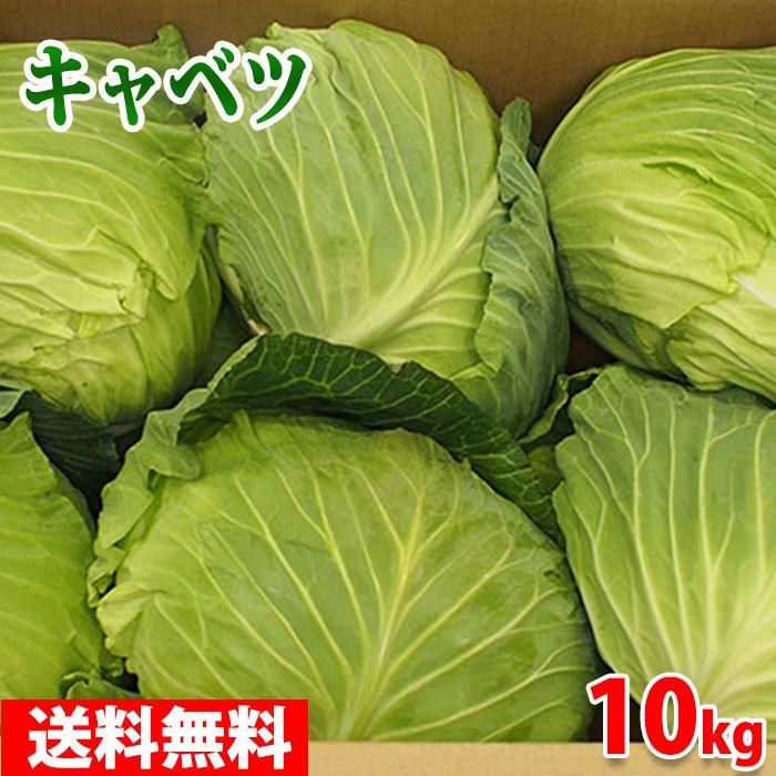 冬キャベツ(寒玉) 【送料無料】愛知県産 キャベツ 6~8玉入り 10kg