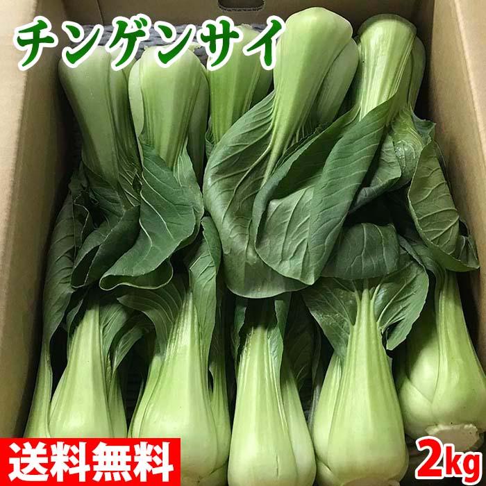 [並行輸入品] 中華料理におすすめの万能野菜 送料無料 長野県産 人気の定番 青梗菜 チンゲンサイ 16~20株入 Lサイズ 約2kg 1箱