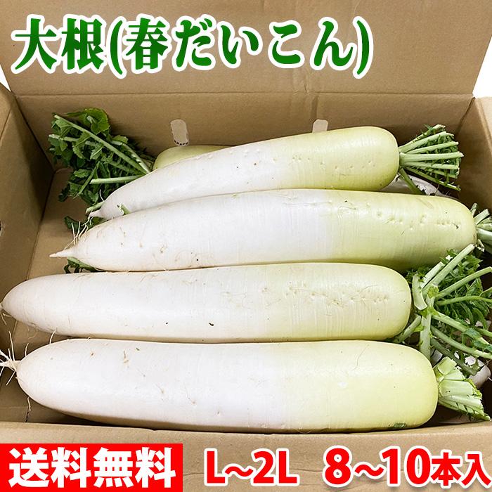 輸入 人気急上昇 送料無料 香川県産 大根 春だいこん 10~8本入 箱 L~2Lサイズ