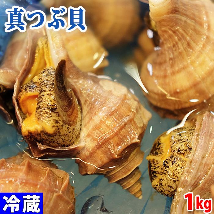 北海道産 セール商品 活 誕生日/お祝い 真ツブ貝 約1kg 5~6個