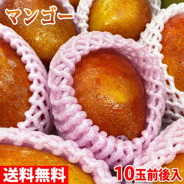 愛文(アーウィン)マンゴー 【送料無料】台湾産 完熟マンゴー(愛文マンゴー) 10玉前後入 5kg
