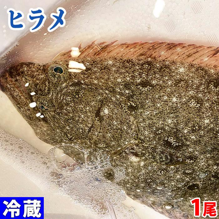 島根県産他 信託 ヒラメ 天然 約1.2kg前後 正規店 1尾