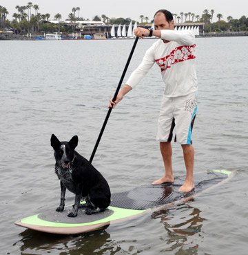 スタンドアップパドルボード マリンスポーツ サップボード SUPボード PUPDECK-SOLID Better Surf...than Sorry Paddle with your dog Pup Deck SUP Traction Pad for Dogs Stand Up Paスタンドアップパドルボード マリンスポーツ サップボード SUPボード PUPDECK-SOLID