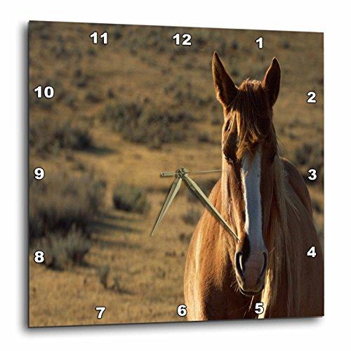 壁掛け時計 インテリア 海外モデル アメリカ 輸入 3dRose TDSwhite ? Horse Equine Photos - Horse Western Background - 15x15 Wall Clock (DPP_285500_3)壁掛け時計 インテリア 海外モデル アメリカ 輸入