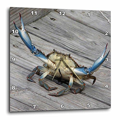 壁掛け時計 インテリア 海外モデル アメリカ 輸入 3dRose dpp_63150_3 Blue Crab-Marine, Creature, Animal, Animals, Wildlife, Ocean, Invertebrate, Crab, Seafood-Wall Clock, 15 by 15-Inch壁掛け時計 インテリア 海外モデル アメリカ 輸入
