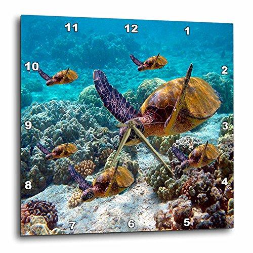 壁掛け時計 インテリア 海外モデル アメリカ 輸入 3dRose dpp_26850_3 Sea Turtles-Wall Clock, 15 by 15-Inch壁掛け時計 インテリア 海外モデル アメリカ 輸入