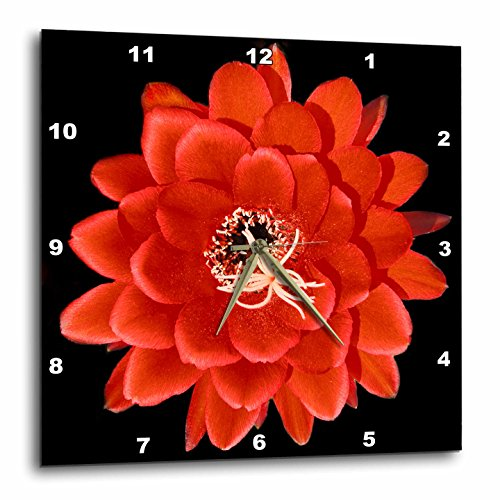 壁掛け時計 インテリア 海外モデル アメリカ 輸入 3dRose DPP_32364_3 Decorative Colorful Garden Botanic Classic Plant Sw Southwest Desert Cactus Red Black Flower Wall Clock, 15 by 15