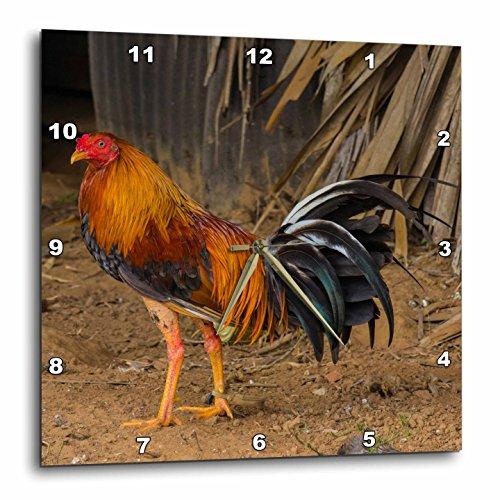 壁掛け時計 インテリア 海外モデル アメリカ 輸入 3dRose Cuba Pinar Del Rio Vinales Rooster Wall Clock, 15x15壁掛け時計 インテリア 海外モデル アメリカ 輸入