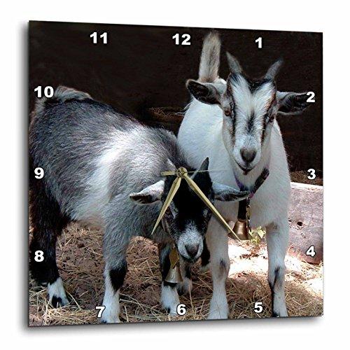 壁掛け時計 インテリア 海外モデル アメリカ 輸入 3dRose LLC dpp_1068_3 Wall Clock, 15 by 15-Inch, Pygmy Goat壁掛け時計 インテリア 海外モデル アメリカ 輸入