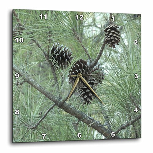 壁掛け時計 インテリア 海外モデル アメリカ 輸入 3dRose dpp_23812_3 Pine Cones Wall Clock, 15 by 15-Inch壁掛け時計 インテリア 海外モデル アメリカ 輸入