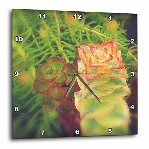 壁掛け時計 インテリア 海外モデル アメリカ 輸入 3dRose Cassie Peters Photography - Succulents - 15x15 Wall Clock (dpp_283680_3)壁掛け時計 インテリア 海外モデル アメリカ 輸入
