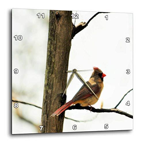 壁掛け時計 インテリア 海外モデル アメリカ 輸入 3dRose Dreamscapes by Leslie - Birds - Female Cardinal Sitting in a Tree - 15x15 Wall Clock (DPP_292217_3)壁掛け時計 インテリア 海外モデル アメリカ 輸入