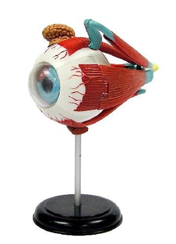 エレンコ ロボット 電子工作 知育玩具 パズル EDU-SK007 Elenco 3D DIY Eyeball Anatomy With CDエレンコ ロボット 電子工作 知育玩具 パズル EDU-SK007