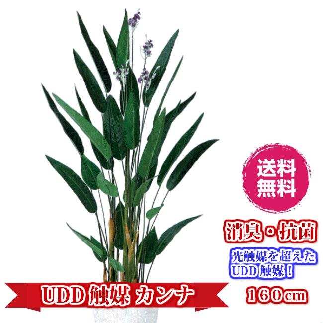 キャッシュレス5%還元対象 観葉植物 造花 大型 人工観葉植物 消臭・抗菌 UDD触媒 カンナ 160cm・200cm 送料無料 フェイクグリーン