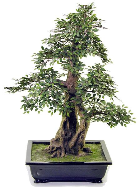 キャッシュレス5%還元対象 観葉植物 造花 リビング 人工観葉植物 消臭・抗菌 ミニけやき盆栽C 72cm 送料無料 フェイクグリーン