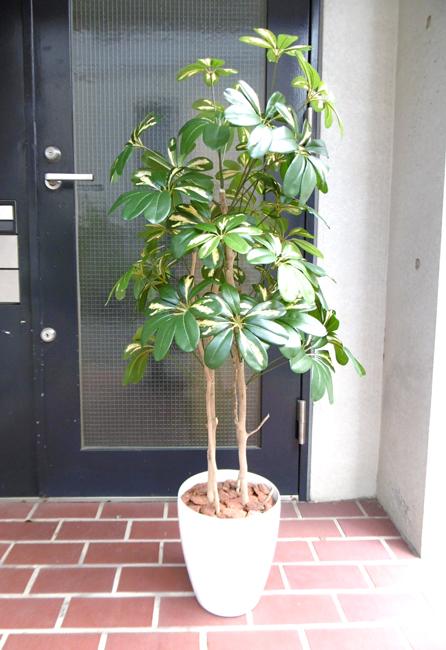 キャッシュレス5%還元対象 観葉植物 造花 人工観葉植物 消臭・抗菌 UDD触媒 ベビーシェフレラポット(カポック) 120cm 個別送料 フェイクグリーン