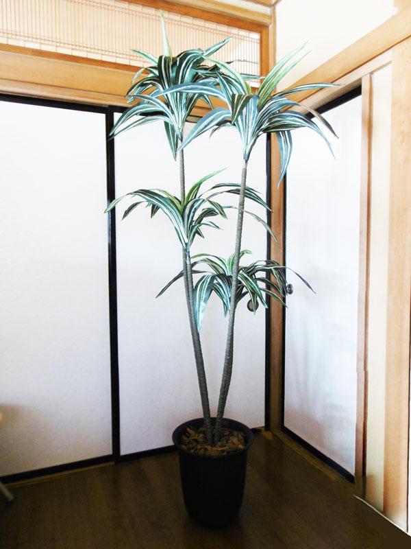 キャッシュレス5%還元対象 【人工観葉植物 送料無料 造花】 ドラセナ 190cm