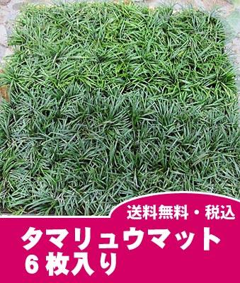 【送料無料】【良品】タマリュウマット 玉竜マット6枚入り大きさ:60cm×30cm