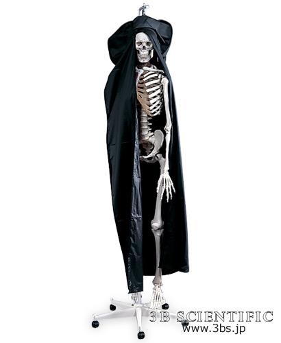 【感謝価格】世界基準 3Bサイエンフィティック社等身大骨格モデル専用ダストカバー【02P06Aug16】