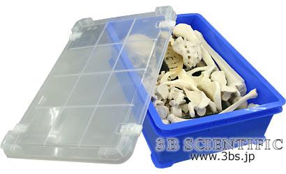 【送料無料】【感謝価格】世界基準 3Bサイエンフィティック社収納プラスチックケース