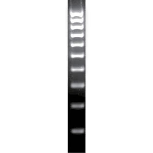 DNAサイズマーカー BIO-33029 【アズワン】