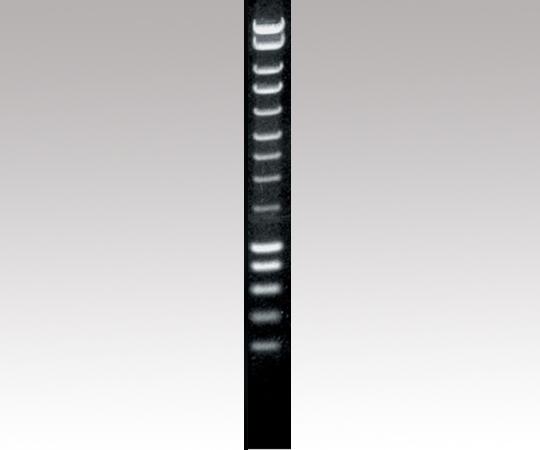 DNAサイズマーカー BIO-33026 【アズワン】【02P06Aug16】