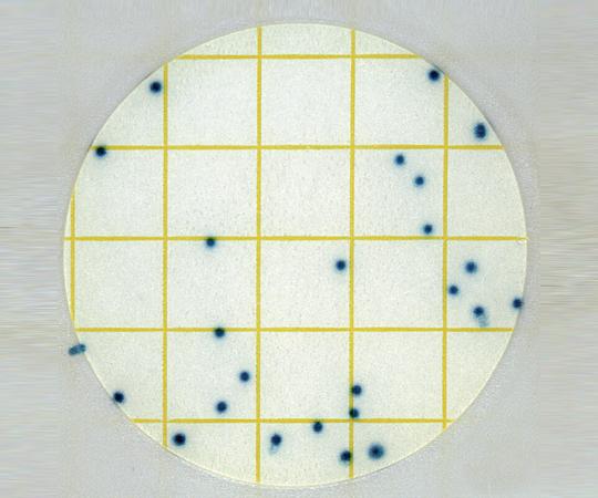 ペトリフィルム大腸菌選択用6434SEC 【アズワン】