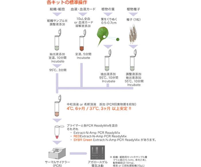 DNA抽出PCRキットXNAP1KT