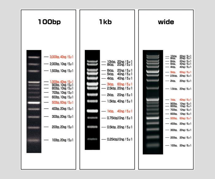 DNAラダーマーカーVIO-1kb-5