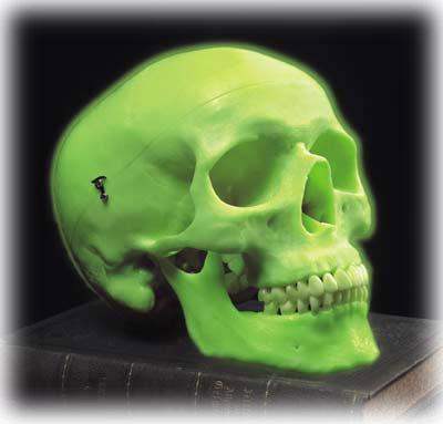【送料無料】【感謝価格】【特価販売】 3B社 頭蓋骨模型 ネオン頭蓋モデル (a20-n)